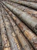 剪切日志长期被堆积的结构树 免版税库存图片