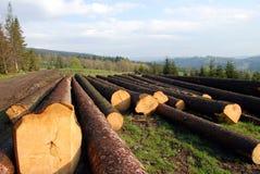 剪切木的山 免版税库存照片
