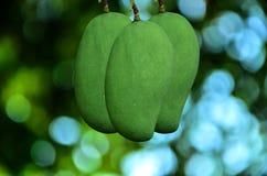 剪切果子果子芒果陈列被切的妇女 库存图片
