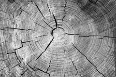剪切树干 免版税图库摄影