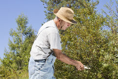 剪切树枝和套期交易 免版税库存图片