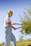 剪切树枝和套期交易 图库摄影