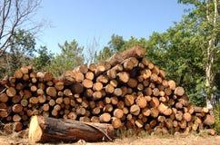 剪切森林被堆积的树干 免版税图库摄影