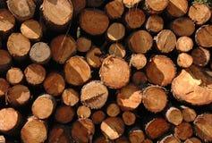 剪切森林被堆积的树干 图库摄影