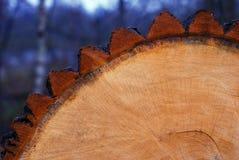 剪切橡木树干 免版税库存照片