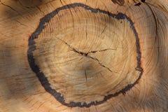 剪切纹理木头 图库摄影