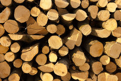 剪切组大被定购围绕树桩结构树 免版税图库摄影