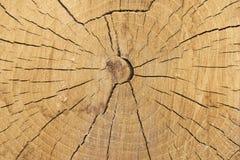 剪切结构树。 图库摄影