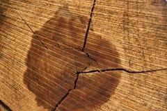 剪切结构树日志 在年轮和纹理的特写镜头 库存图片