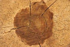 剪切结构树日志 在年轮和纹理的特写镜头 免版税库存照片