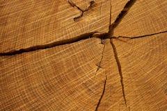 剪切结构树日志 在年轮和纹理的特写镜头 图库摄影