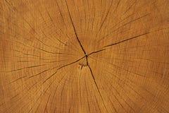 剪切结构树日志 在年轮和纹理的特写镜头 免版税图库摄影