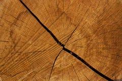 剪切结构树日志 在年轮和纹理的特写镜头 库存照片