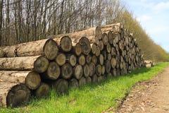 剪切结构树登录在路旁边被堆积的森林 库存照片