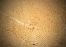 剪切结构树的重点 免版税库存图片