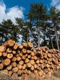 剪切结构树 图库摄影