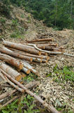 剪切被砍伐山林的结构树木头 免版税库存照片