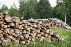 剪切被砍伐山林的结构树木头 免版税库存图片