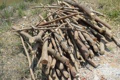 剪切被砍伐山林的结构树木头 库存照片
