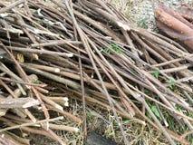 剪切被砍伐山林的结构树木头 库存图片