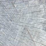 剪切被风化的灰色自然树桩纹理结构&# 免版税库存照片