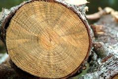 剪切详细资料树干 免版税库存照片