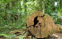 剪切雨林结构树 免版税库存图片