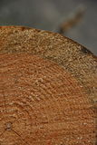 剪切结构树 库存照片