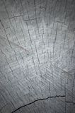 剪切vignetted的灰色自然树桩纹理结构树 免版税库存图片