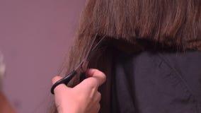 剪妇女有剪刀的` s头发 影视素材