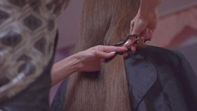 剪妇女有剪刀的` s头发 股票录像
