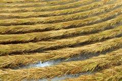剪形成对称样式的草 免版税库存图片