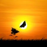 剪影、蝴蝶和花反对背景美好的日落 免版税库存照片