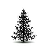 剪影与阴影的树云杉 免版税库存照片