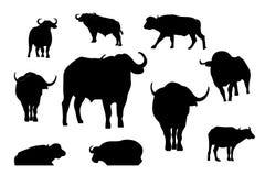 剪影公牛或水牛传染媒介例证,动物商标传染媒介的汇集 向量例证