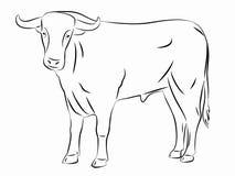 剪影公牛,传染媒介例证 免版税库存图片