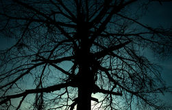 剪影可怕的树 库存图片