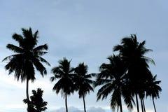 剪影在天空的椰子树 免版税图库摄影