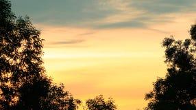 剪影在日落天空的阴影树感觉象单独有被投入的文本的拷贝空间 库存图片