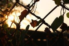 剪影在日落的金属篱芭 库存照片