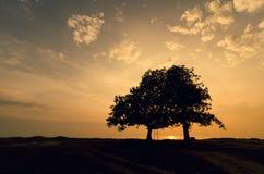 剪影在海滨的树图象 在日落期间的黄色背景颜色 免版税库存照片