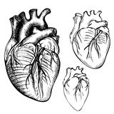 剪影墨水人心脏 被刻记的解剖心脏例证 免版税库存图片