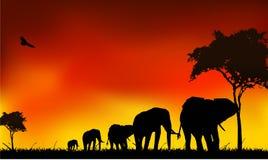 剪影大象行程 库存图片