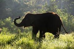 剪影大象走 免版税库存照片