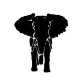 剪影大象 库存照片