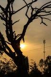 剪影干燥树阳光 库存图片