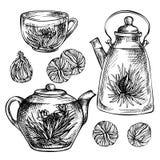 剪影手拉的茶具 与花的开花的绿茶 免版税库存图片