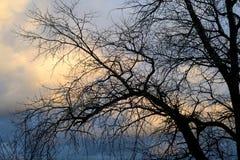 剪影日落结构树 免版税库存照片