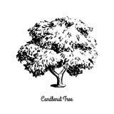 剪影树例证 免版税库存照片