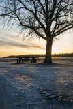剪影树和长凳 免版税图库摄影